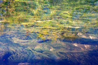 Fish in Eel Grass