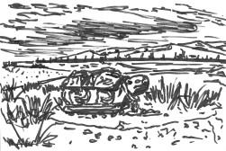 Хархорин Эрдэнэ Зуу 4 Turtle