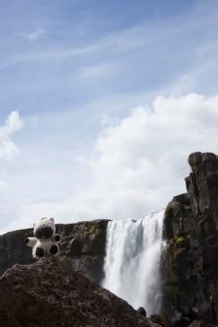 Zebra Thingvellir Waterfall