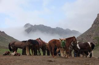 Ёлын Ам Horses