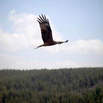 Амарбаясгалант Eagle