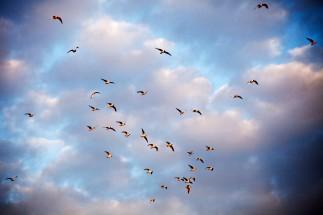 Мінск Birds