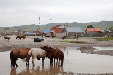 Хархорин Horses