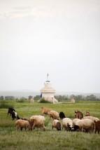 Хархорин Stupa with Sheep