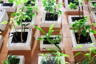 ユニクロ Plants