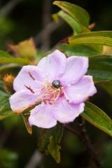 西貢 Bug on Flower