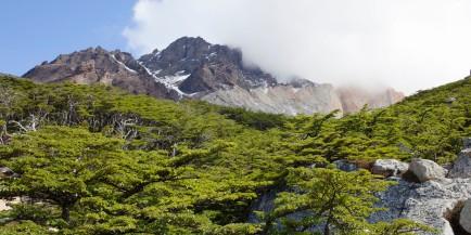 Lago Torre Hike Trees