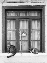 Majestic Cats Framed