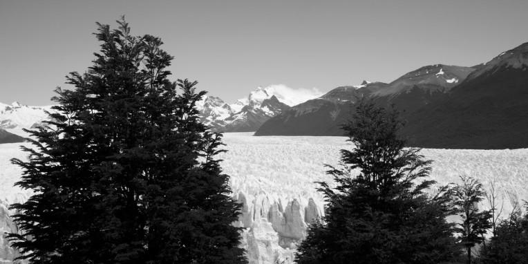 Perito Moreno Scale Trees B&W