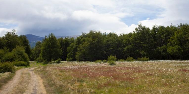 Serón Meadow