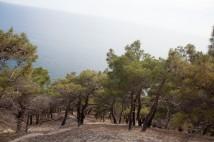 Новороссийск Гора Колдун Trees
