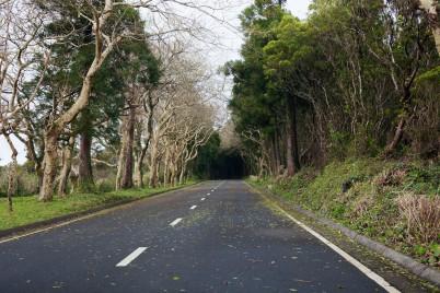 Faial Caldeira Road