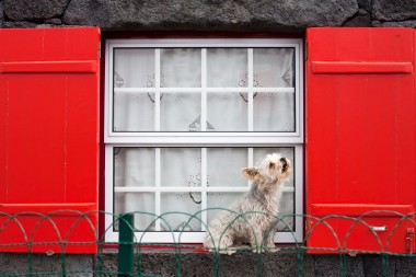 Pico Cachorro Dog in Window