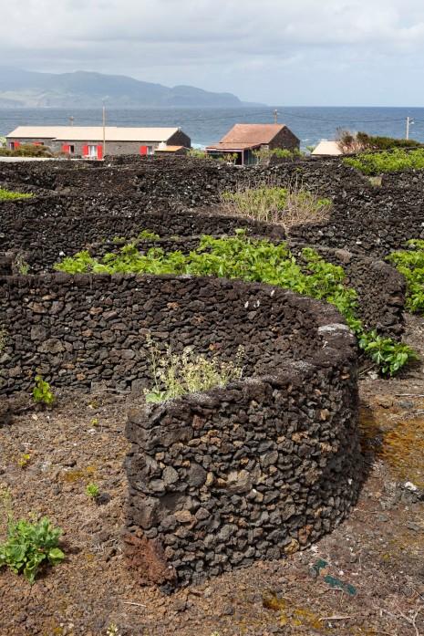 Pico Cais do Mourato Volcanic Walls