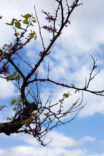 Pico São Roque Tree