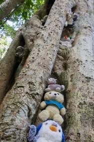 Angibles Tree
