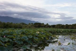 池上蓮花池2