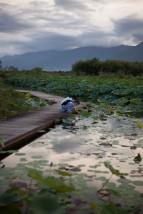 池上蓮花池3