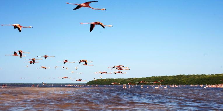Flamingo Formation 2