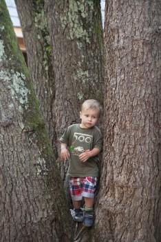 Tree Boy