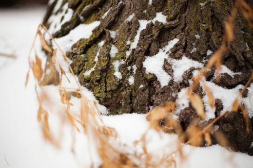 Trunk Snow