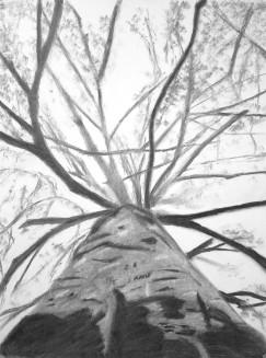 belowthesurfacetree