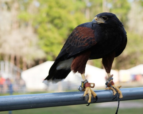 Dark Bird 1