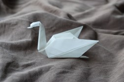 06 Swan