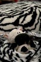 06 zebra world 1
