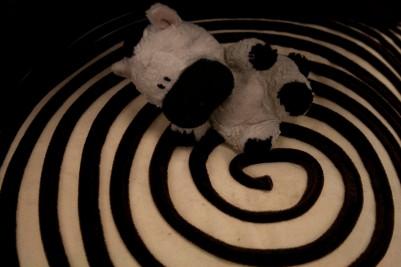 08 zebra world 3