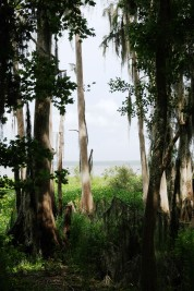 Lake Pithlachocco 2