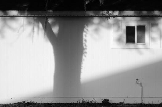 Palm Point Shadow BW